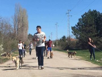 Световния ден на кучето