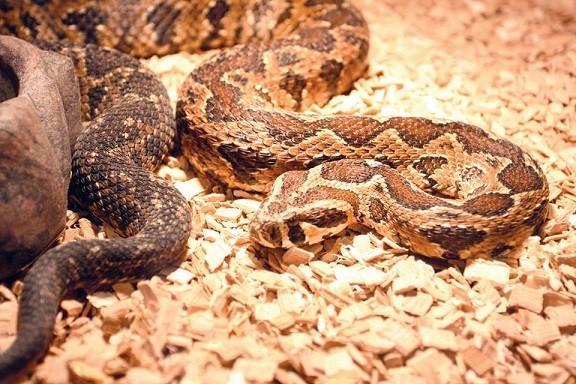 Изложба на екзотични животни може да бъде видяна в Историческия музей