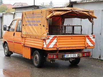 50 бездомни кучета заловени през последния месец в Гюргево