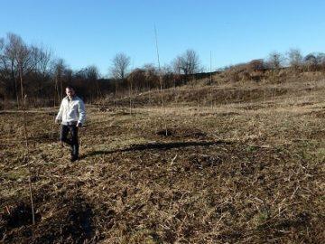 Нови 40 декара с тополови фиданки засадиха в община Ценово