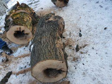 Гюргево отрязани дървета