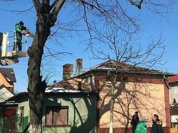 Опасни дървета премахват в Гюргево