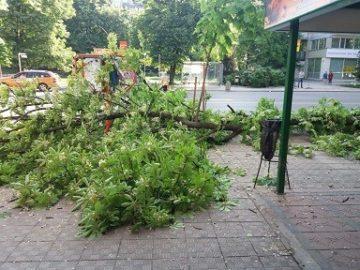 Голям клон падна пред посещавана русенска бърза закуска, за късмет няма ранени
