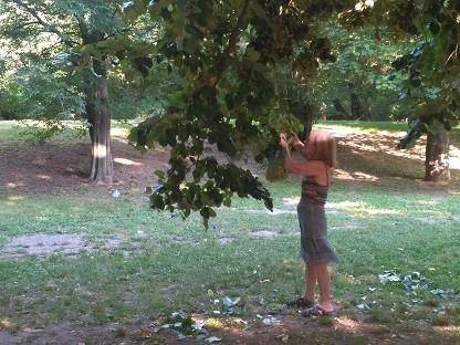 Русенци отново нападнаха липовите дървета, глобите обаче са сериозни