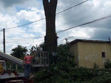 Режат опасни дървета в Гюргево преди бурите
