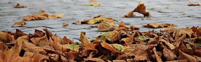 вятър есен листа