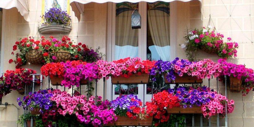 цветя балкон пролет имоти русе