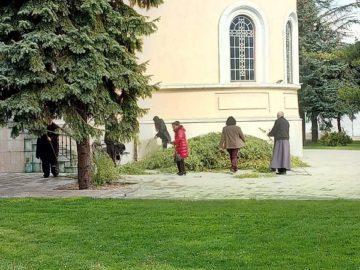 Хиляди върбови клонки доставят в русенските православни храмове за утрешната Цветница