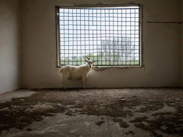 коза изкуство