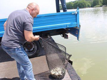 богданов зарибяване риба езерото липник