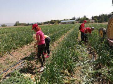"""Започна практика на 20 ученици по проект """"Изграждане на практически компетенции в органичното земеделие"""" по програма Еразъм +"""