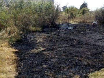 Спасиха таралеж при голям пожар край гюргевско село