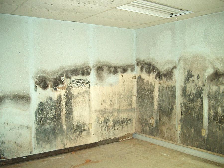 стена мухъл