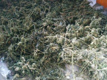 Значително количество наркотици е задържано в Беленско