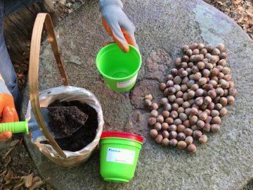 Деца от Ценовско ще засадят нови 150 дръвчета