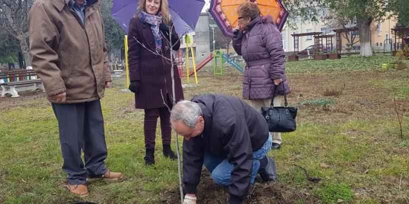 Съученици от набор 1949 година засадиха дървета в Новград