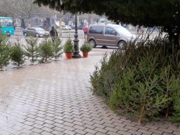 """Няма съществена промяна в цените на """"живите"""" и отрязаните елхи в Русе"""