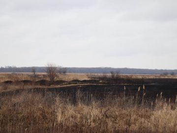 """Тръстика и дървета са изгорели при пожар в защитена местност """"Калимок-Бръшлен"""""""