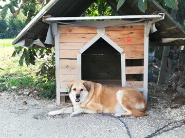 В приюта за безстопанствени животни в Русе са настанени 249 кучета