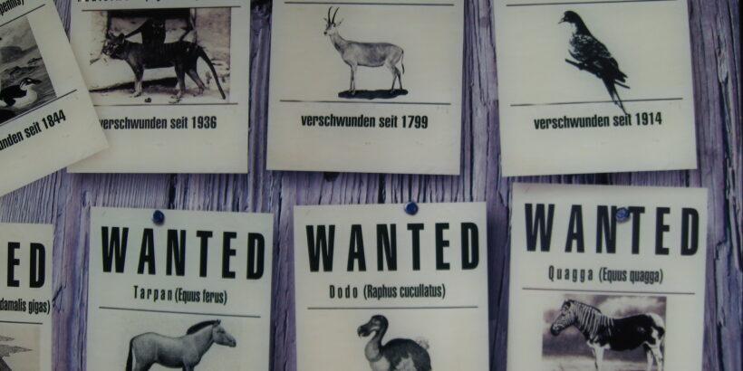 Русенският музей подготвя мобилна изложба, свързана с търговията със застрашени от изчезване растения и животни