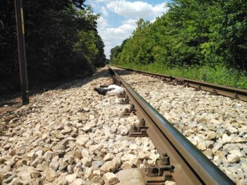 РИОСВ - Русе: Извършена е извънредна проверка за загинали щъркели в Разградско