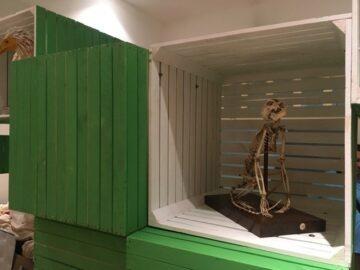 """В РИМ - Русе пристигнаха елементи за пътуващата изложба, наречена """"Природата в риск"""""""